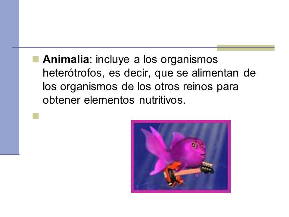 Animalia: incluye a los organismos heterótrofos, es decir, que se alimentan de los organismos de los otros reinos para obtener elementos nutritivos.