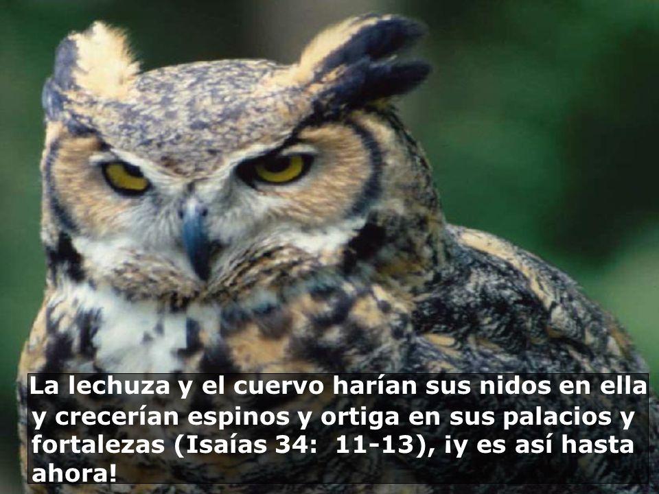 La lechuza y el cuervo harían sus nidos en ella y crecerían espinos y ortiga en sus palacios y fortalezas (Isaías 34: 11-13), ¡y es así hasta ahora.