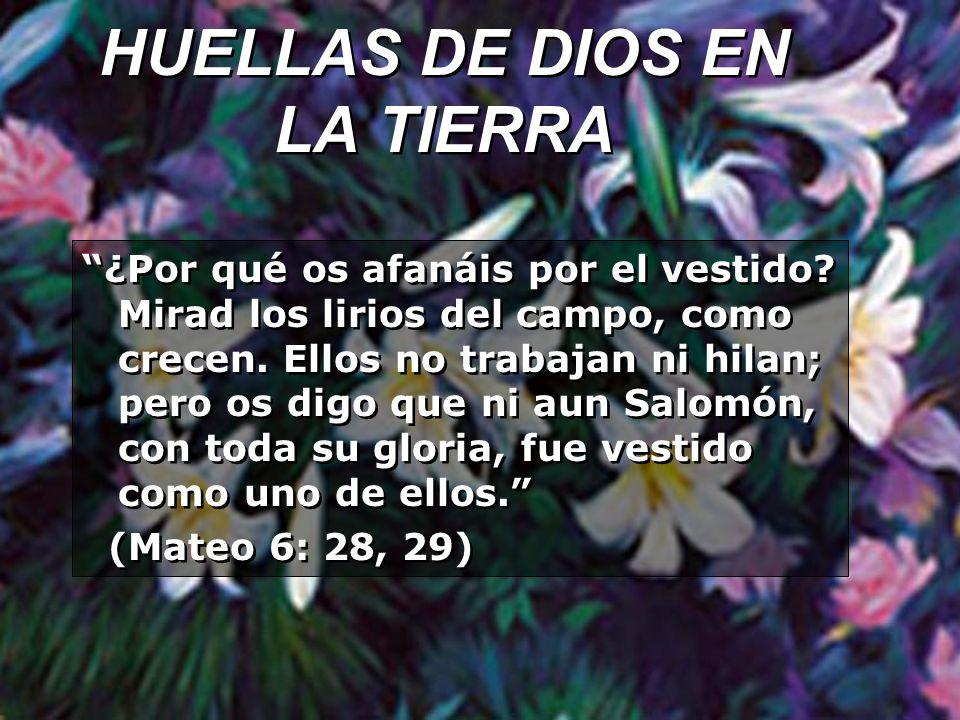 HUELLAS DE DIOS EN LA TIERRA