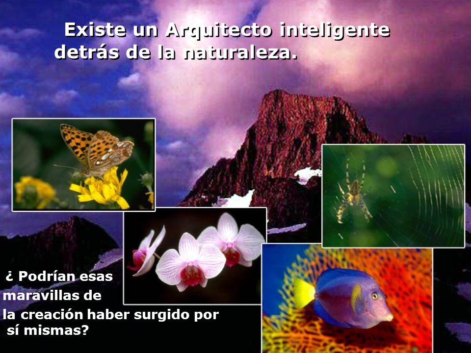 Existe un Arquitecto inteligente detrás de la naturaleza.