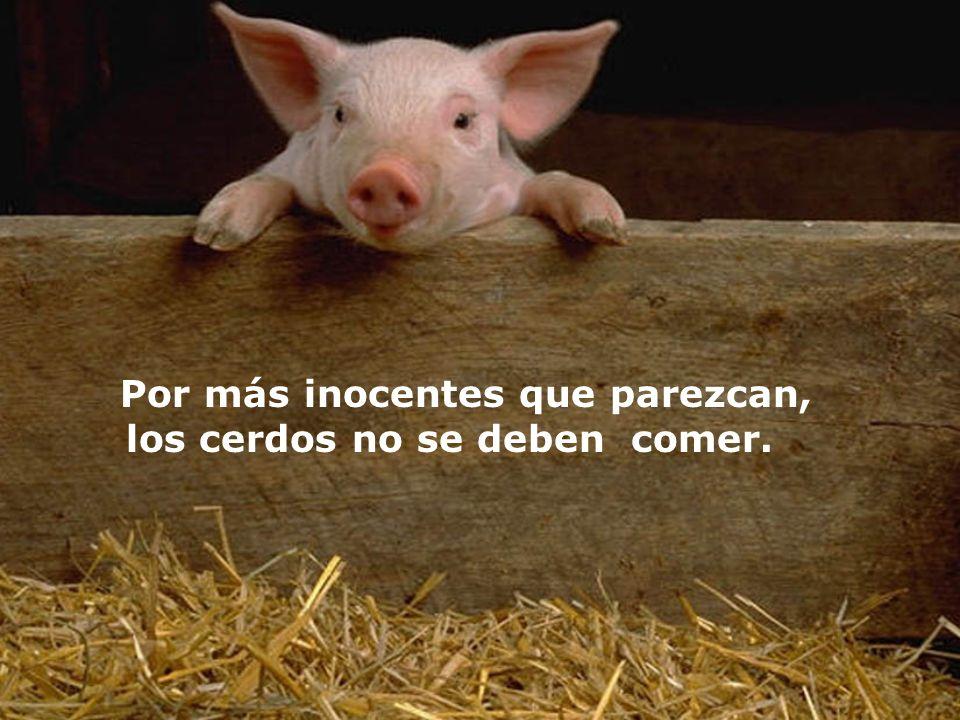 Por más inocentes que parezcan, los cerdos no se deben comer.