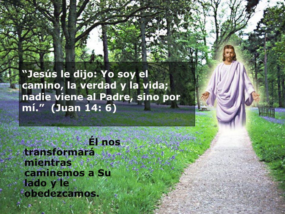 Jesús le dijo: Yo soy el camino, la verdad y la vida; nadie viene al Padre, sino por mí. (Juan 14: 6)