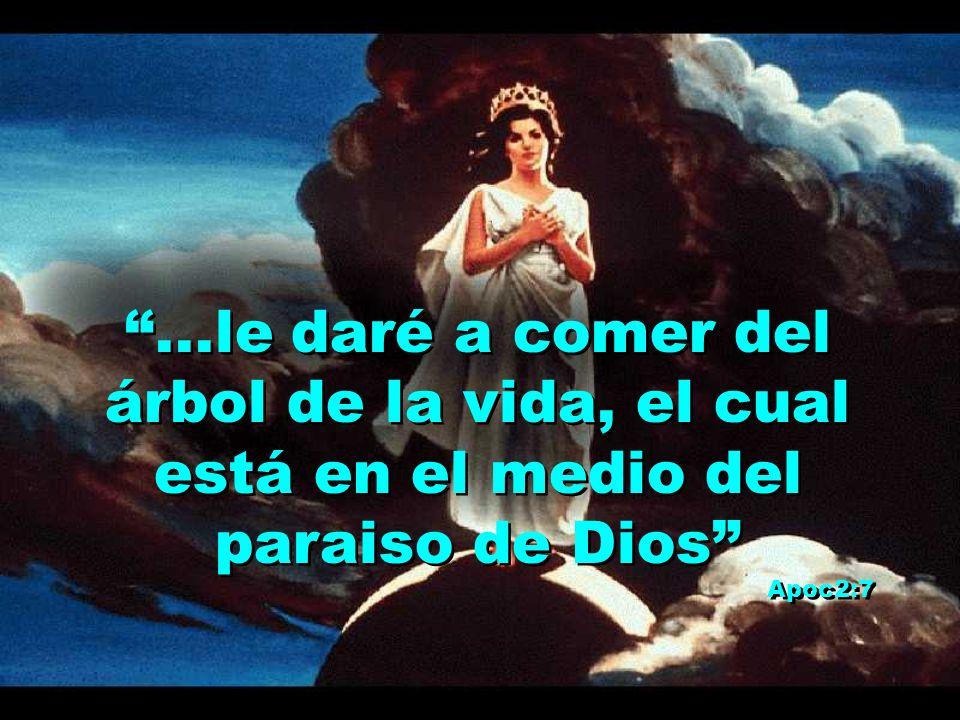 ...le daré a comer del árbol de la vida, el cual está en el medio del paraiso de Dios