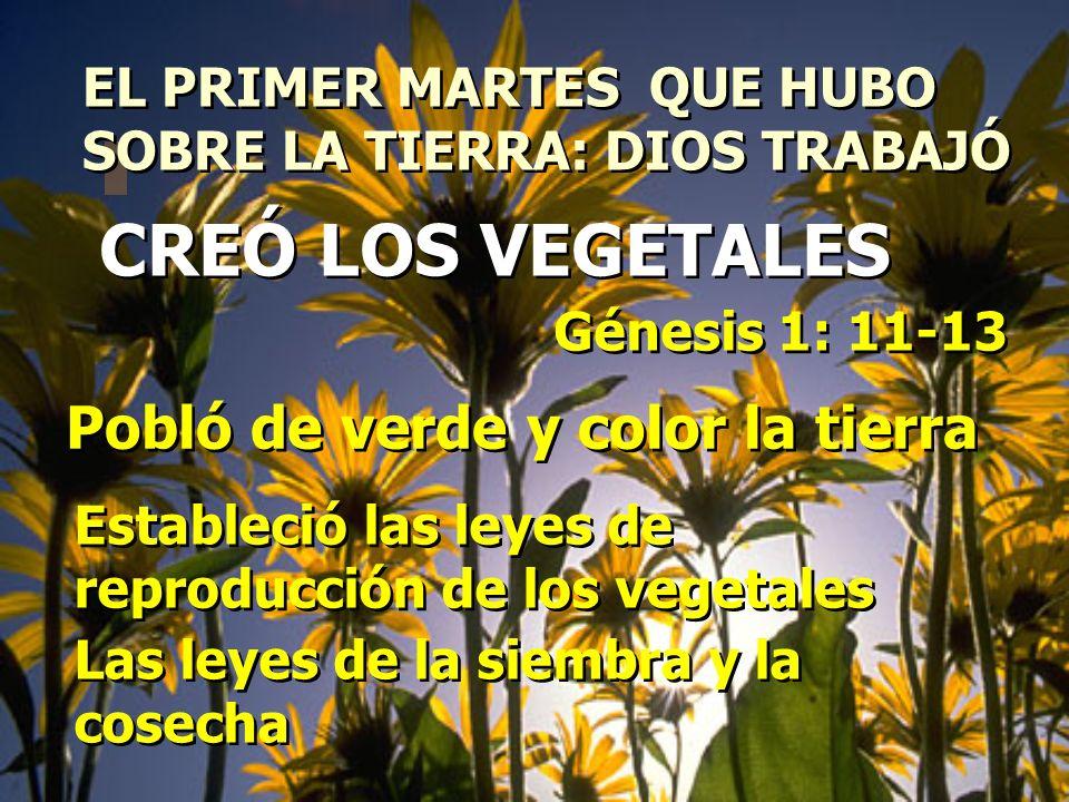 CREÓ LOS VEGETALES Pobló de verde y color la tierra
