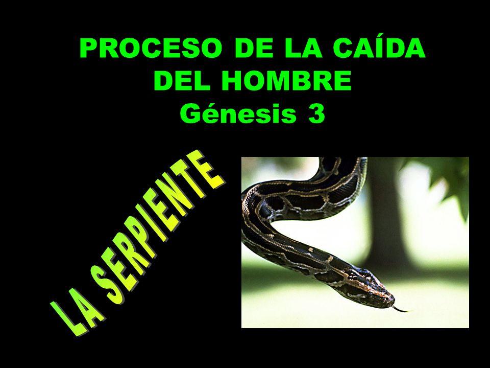 PROCESO DE LA CAÍDA DEL HOMBRE