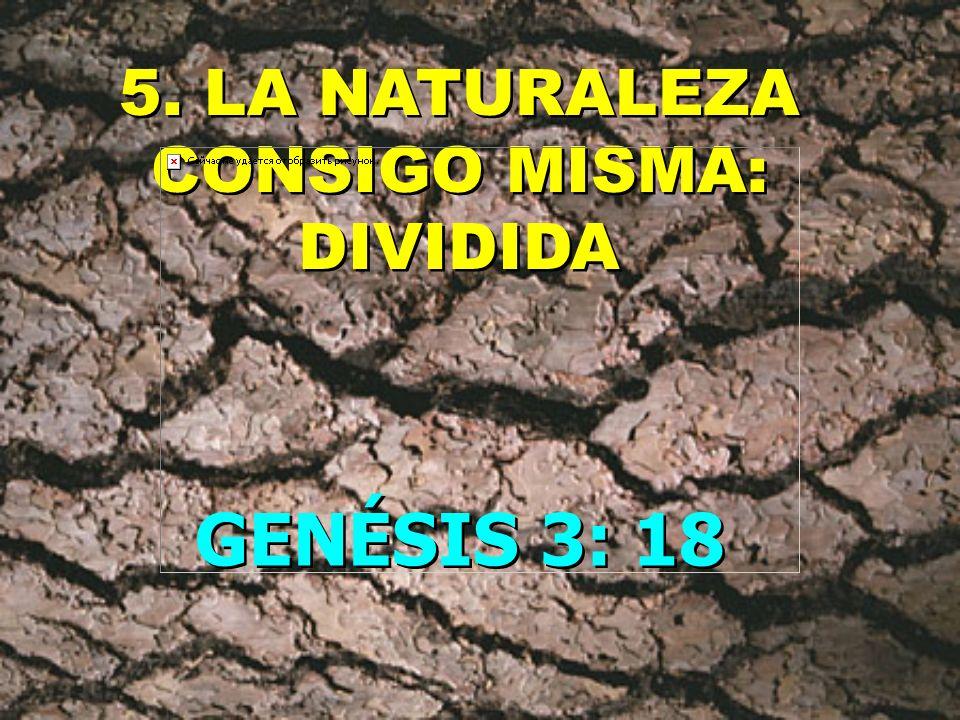 5. LA NATURALEZA CONSIGO MISMA: DIVIDIDA