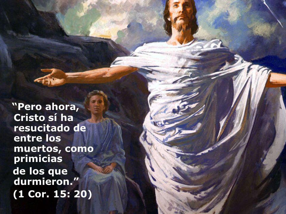 Pero ahora, Cristo sí ha resucitado de entre los muertos, como primicias