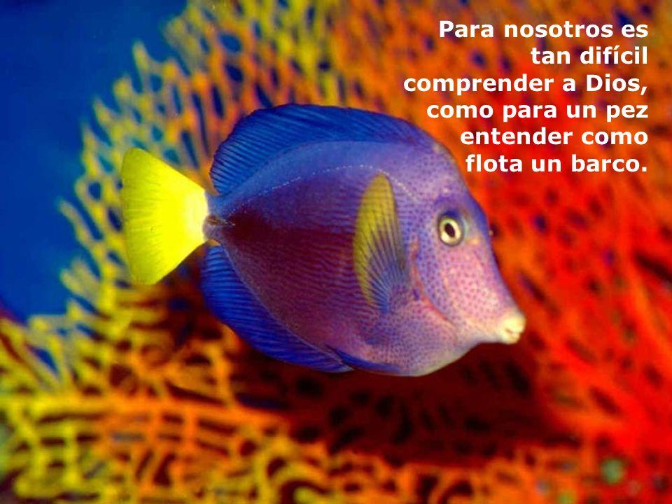 Para nosotros es tan difícil comprender a Dios, como para un pez entender como flota un barco.