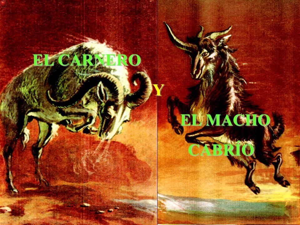 EL CARNERO Y EL MACHO CABRÍO