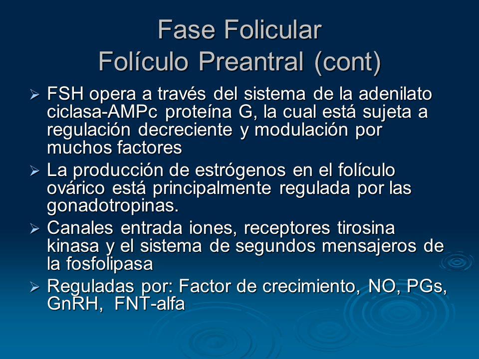 Fase Folicular Folículo Preantral (cont)