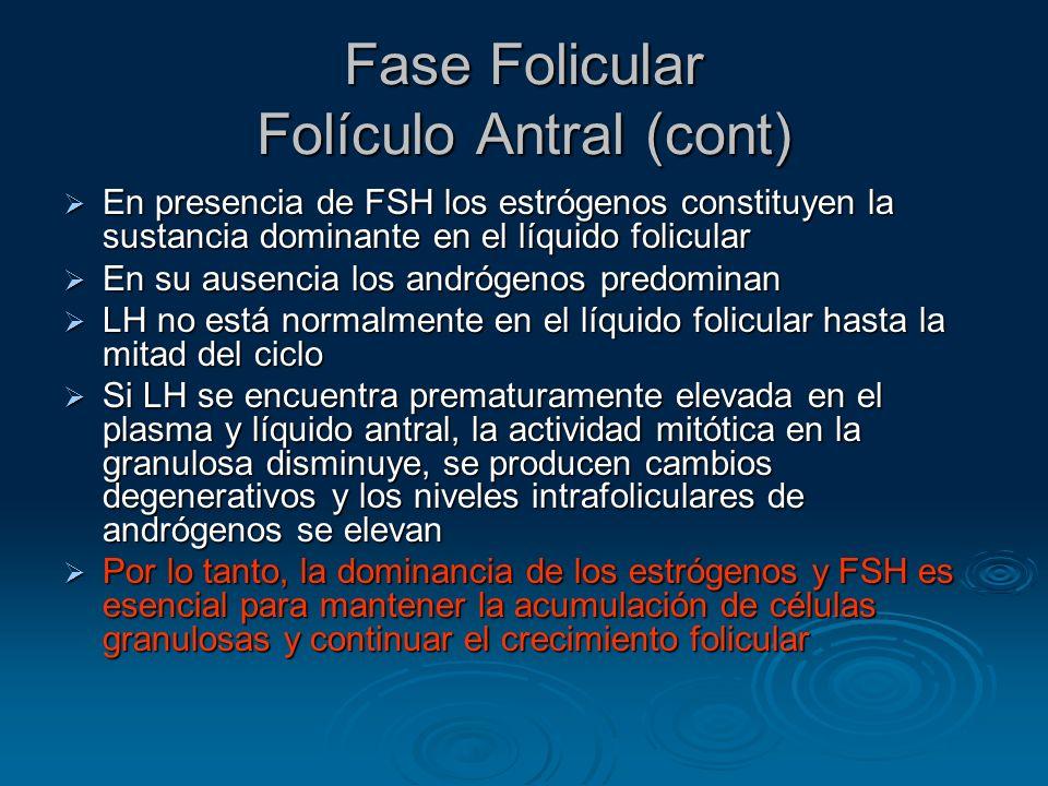 Fase Folicular Folículo Antral (cont)