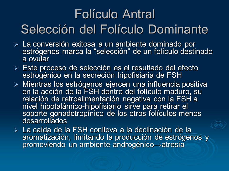 Folículo Antral Selección del Folículo Dominante