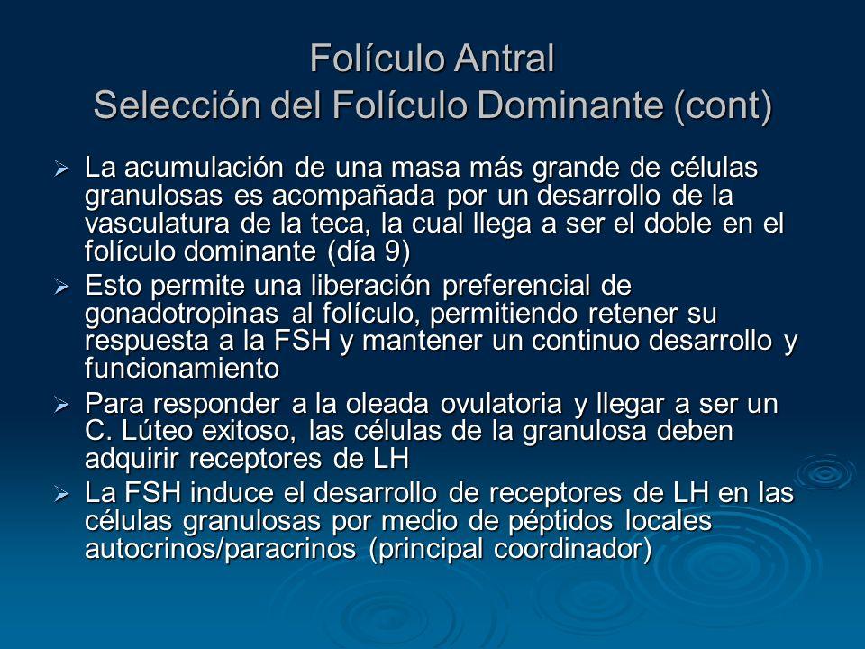 Folículo Antral Selección del Folículo Dominante (cont)