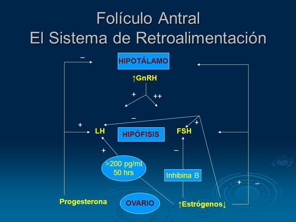 Folículo Antral El Sistema de Retroalimentación