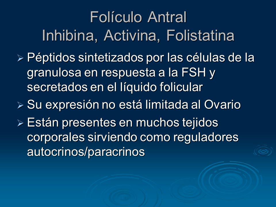 Folículo Antral Inhibina, Activina, Folistatina