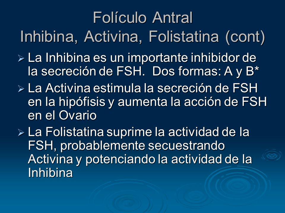 Folículo Antral Inhibina, Activina, Folistatina (cont)