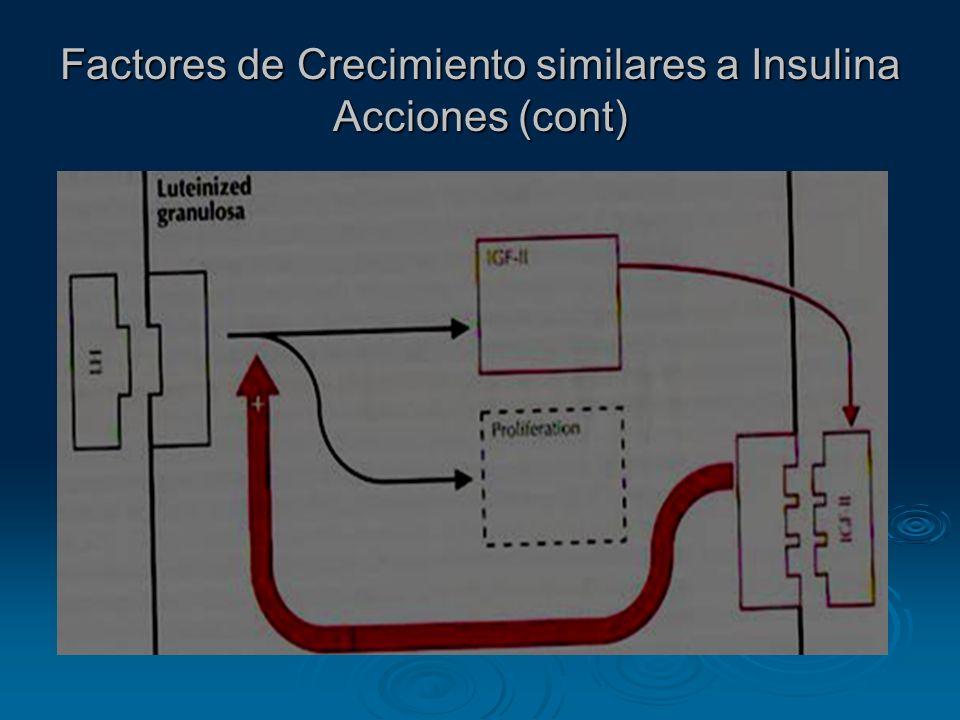 Factores de Crecimiento similares a Insulina Acciones (cont)