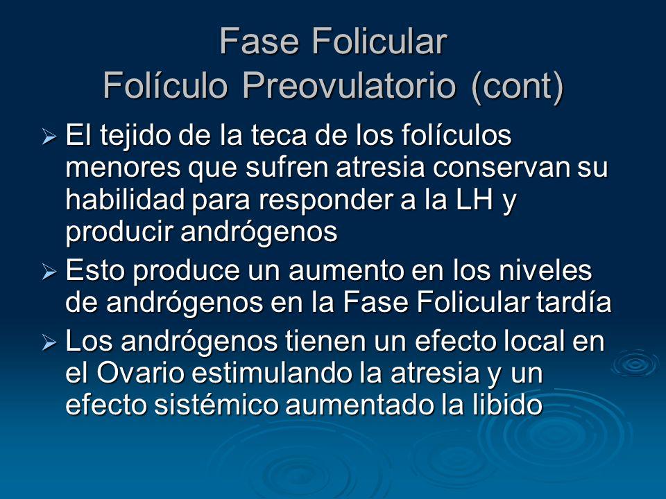 Fase Folicular Folículo Preovulatorio (cont)
