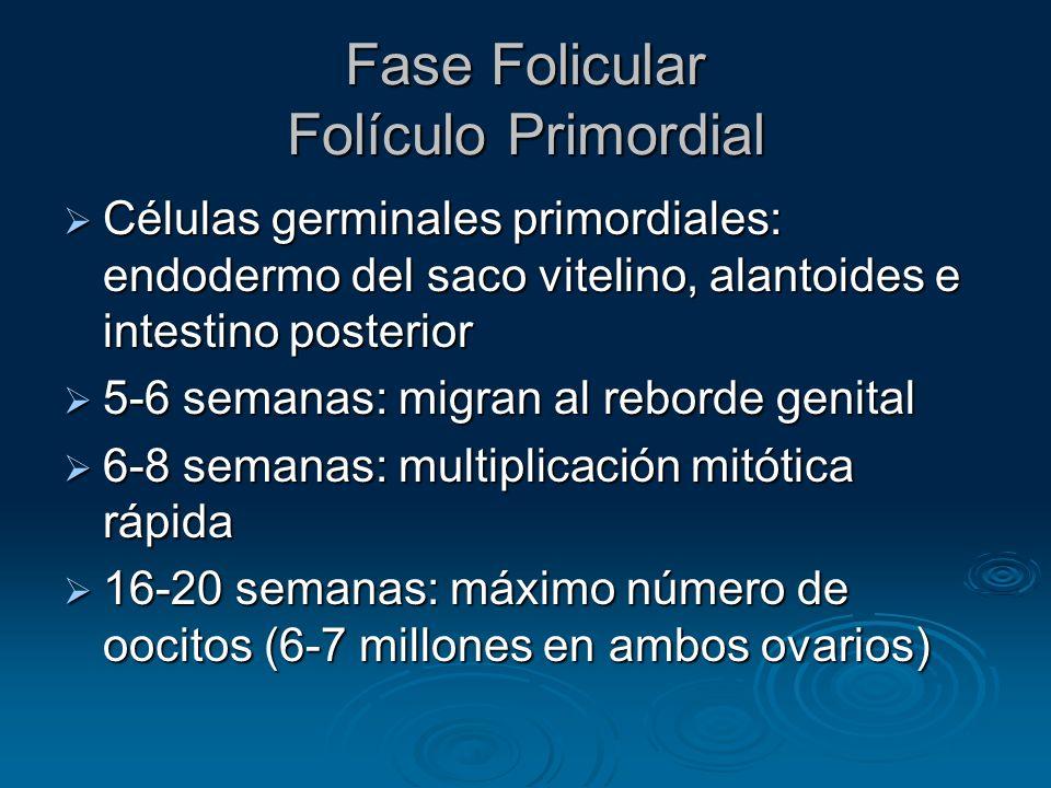 Fase Folicular Folículo Primordial