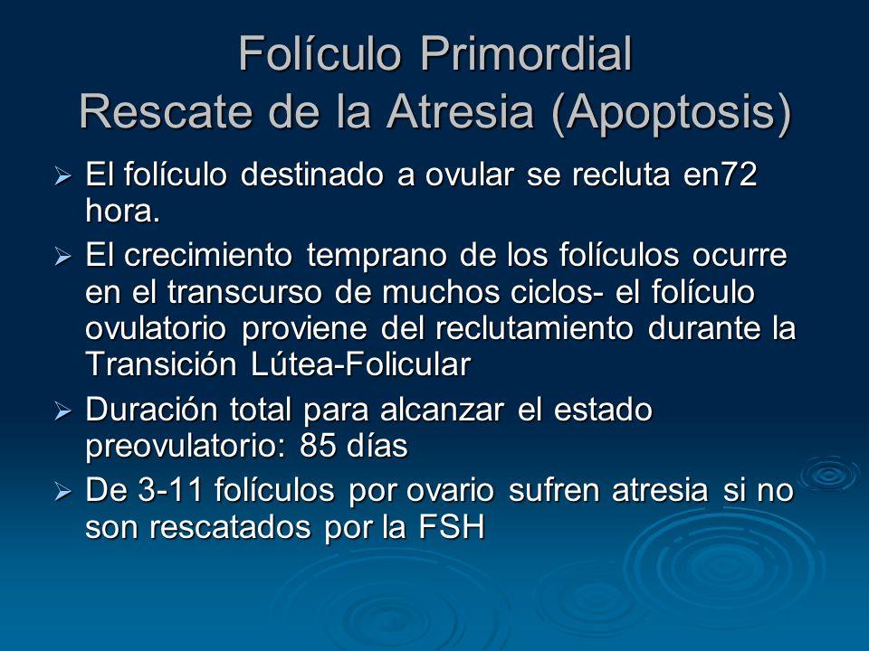 Folículo Primordial Rescate de la Atresia (Apoptosis)
