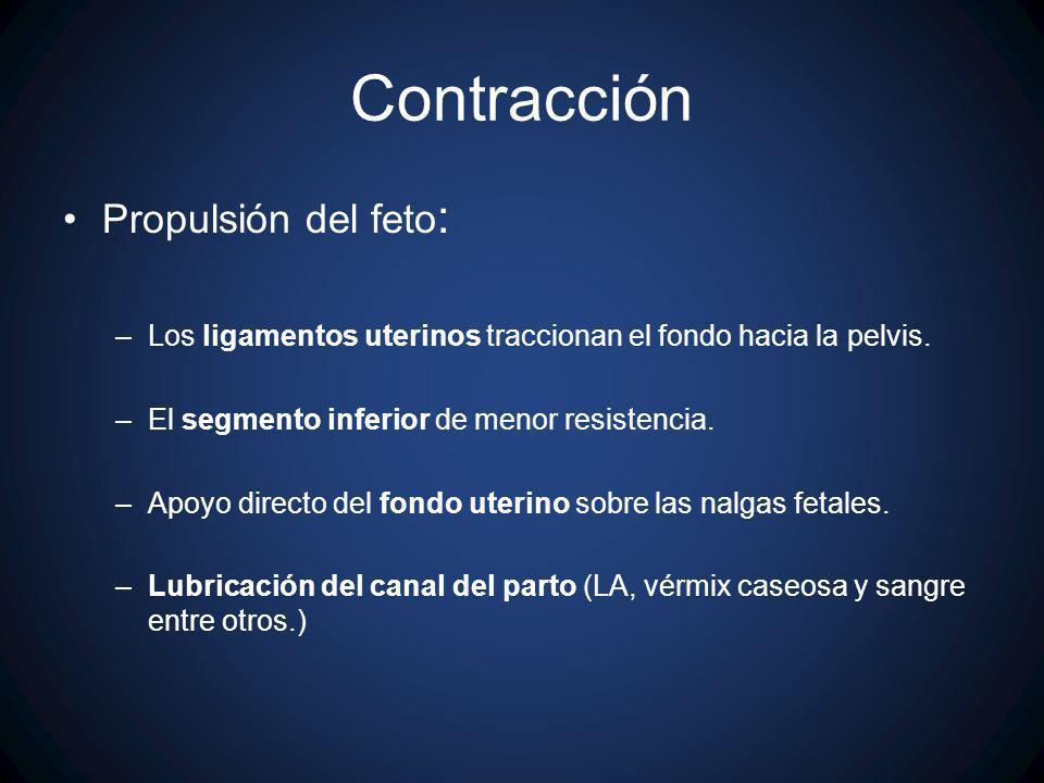 Contracción Propulsión del feto: