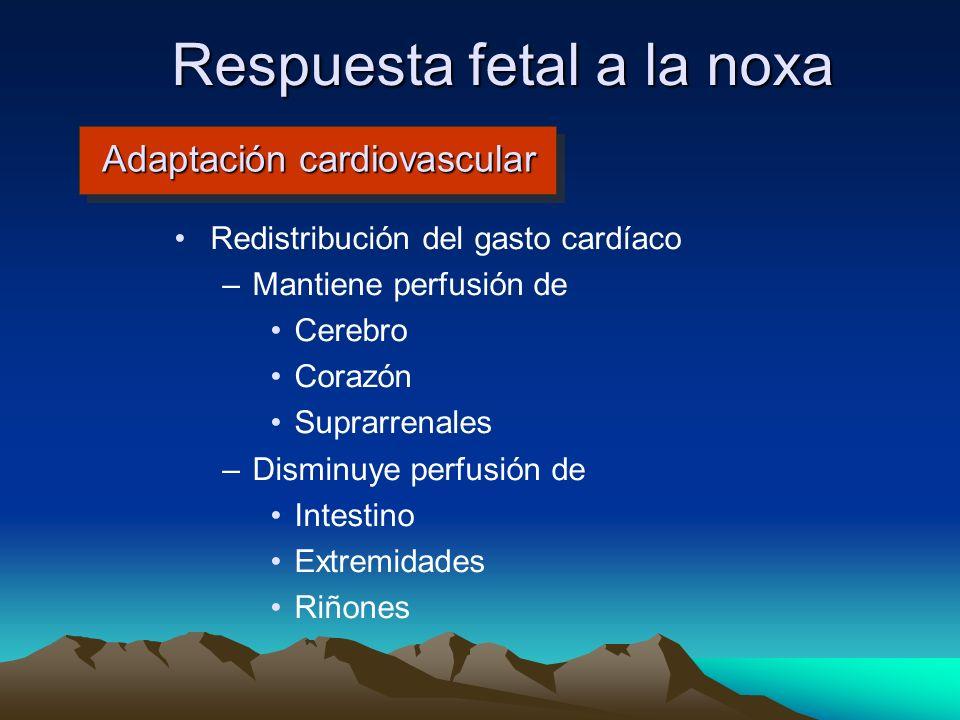 Adaptación cardiovascular