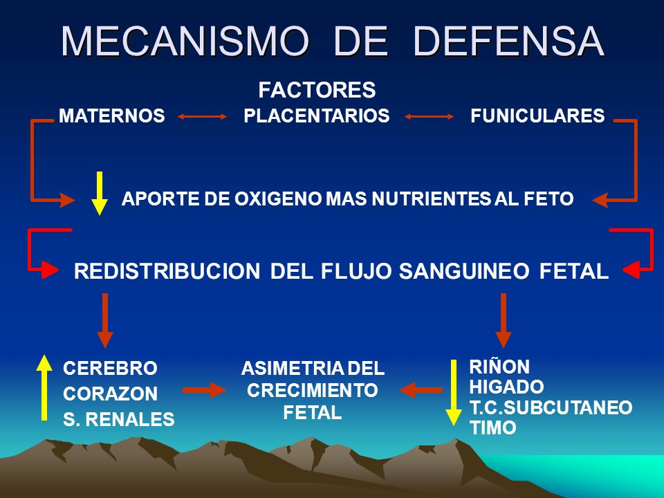 MECANISMO DE DEFENSA FACTORES REDISTRIBUCION DEL FLUJO SANGUINEO FETAL