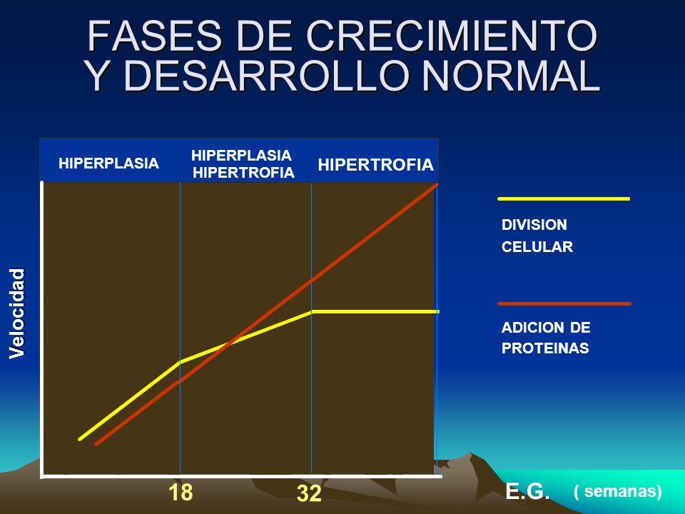 FASES DE CRECIMIENTO Y DESARROLLO NORMAL