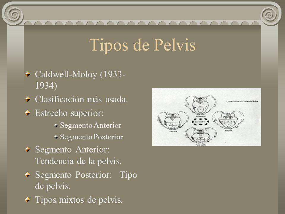 Tipos de Pelvis Caldwell-Moloy (1933-1934) Clasificación más usada.