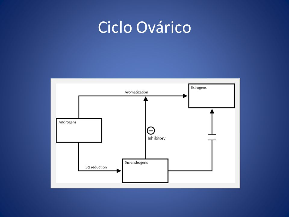 Ciclo Ovárico