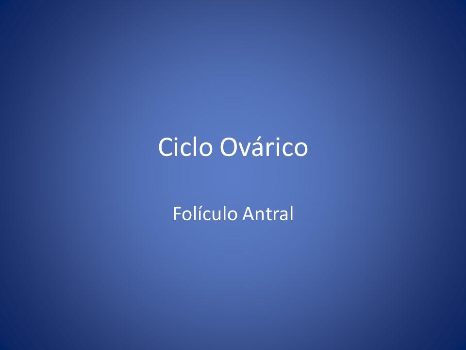 Ciclo Ovárico Folículo Antral