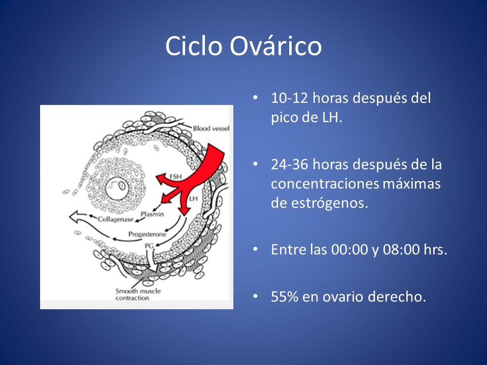 Ciclo Ovárico 10-12 horas después del pico de LH.