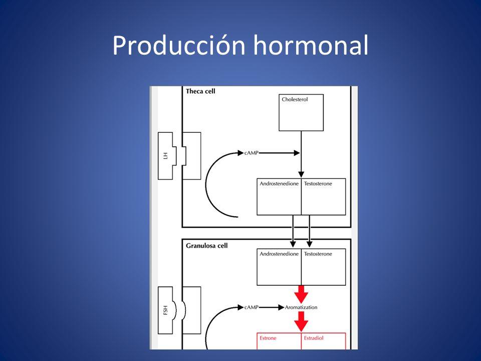 Producción hormonal