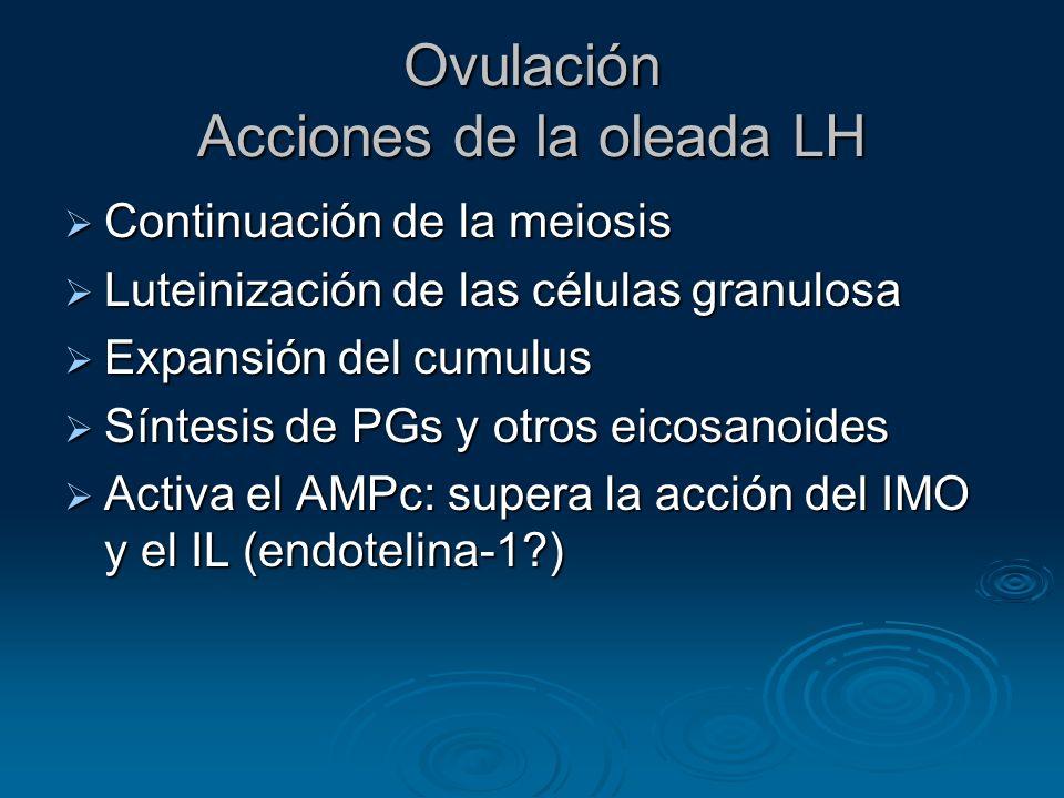 Ovulación Acciones de la oleada LH