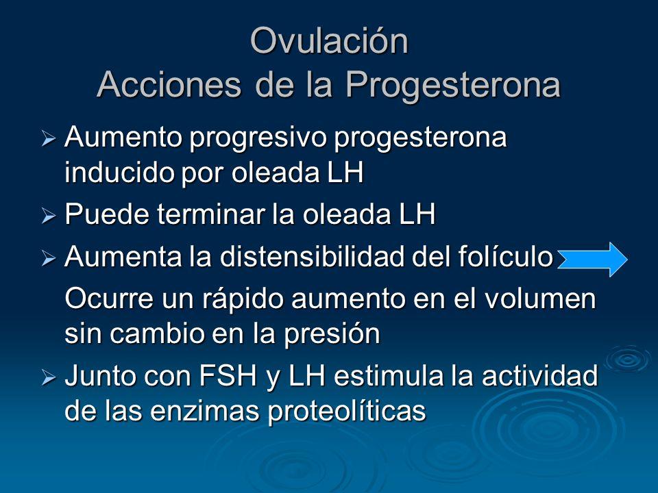 Ovulación Acciones de la Progesterona