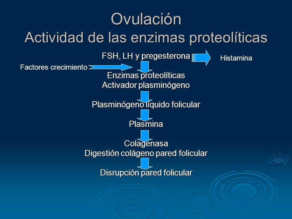 Ovulación Actividad de las enzimas proteolíticas