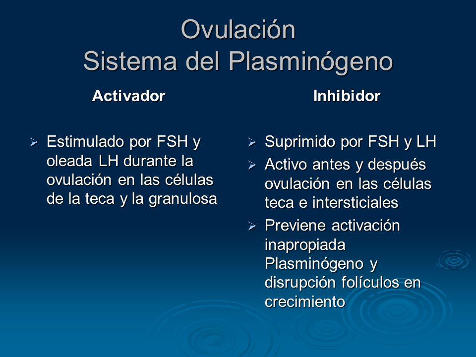 Ovulación Sistema del Plasminógeno
