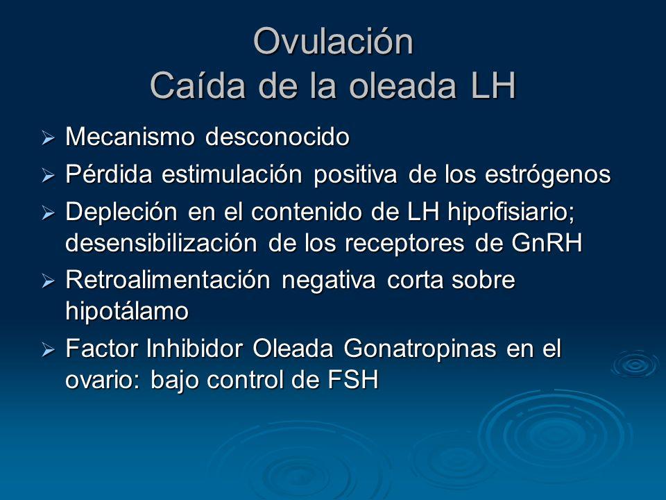 Ovulación Caída de la oleada LH