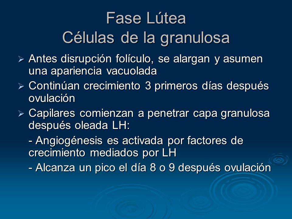 Fase Lútea Células de la granulosa