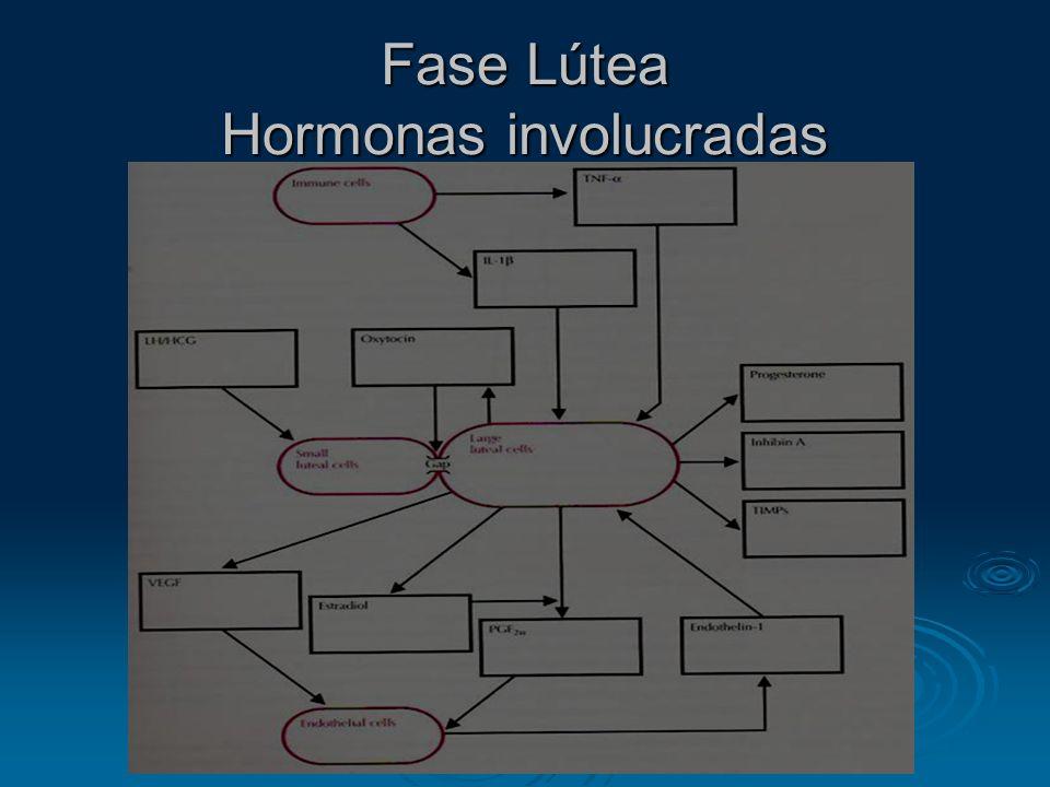 Fase Lútea Hormonas involucradas