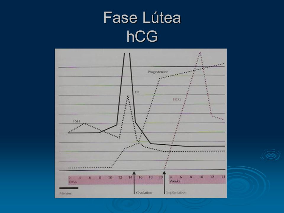 Fase Lútea hCG