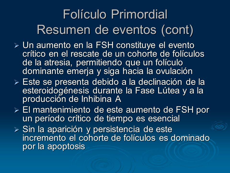 Folículo Primordial Resumen de eventos (cont)