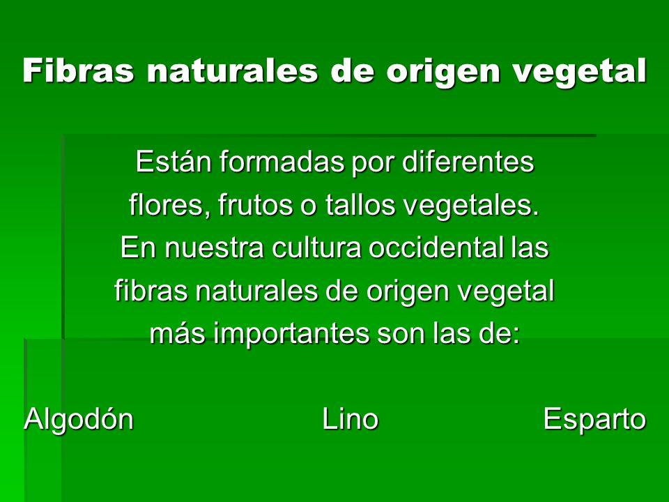 Fibras naturales de origen vegetal