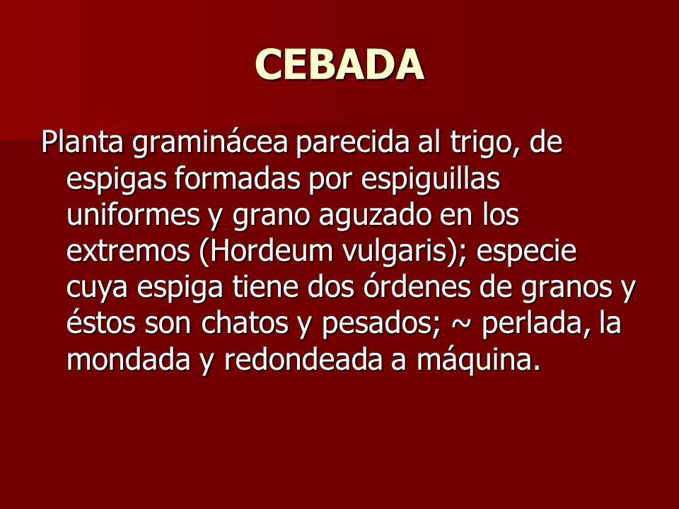 CEBADA