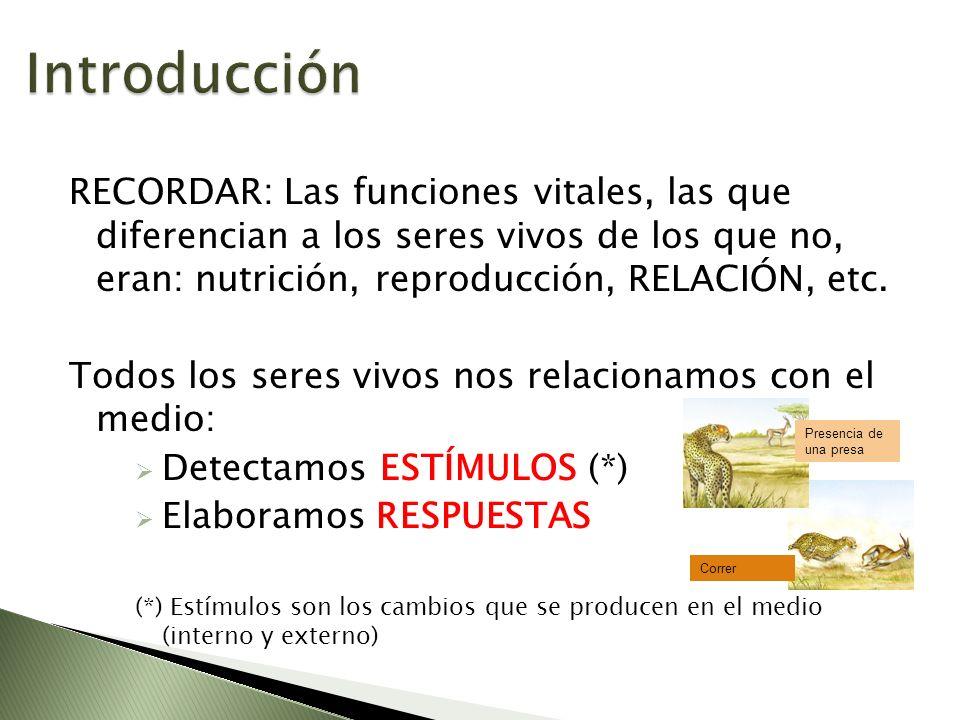 Introducción RECORDAR: Las funciones vitales, las que diferencian a los seres vivos de los que no, eran: nutrición, reproducción, RELACIÓN, etc.