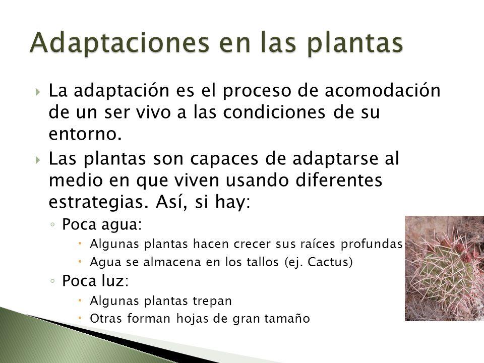 Adaptaciones en las plantas