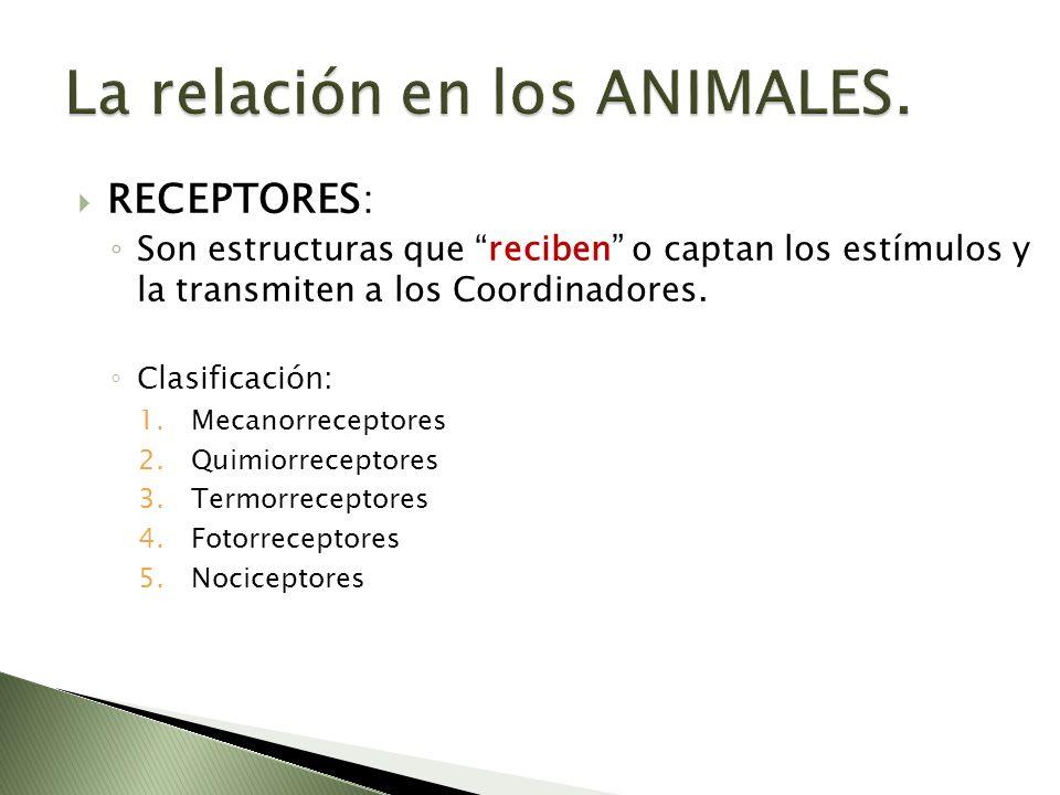 La relación en los ANIMALES.