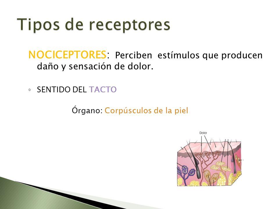 Tipos de receptores NOCICEPTORES: Perciben estímulos que producen daño y sensación de dolor. SENTIDO DEL TACTO.