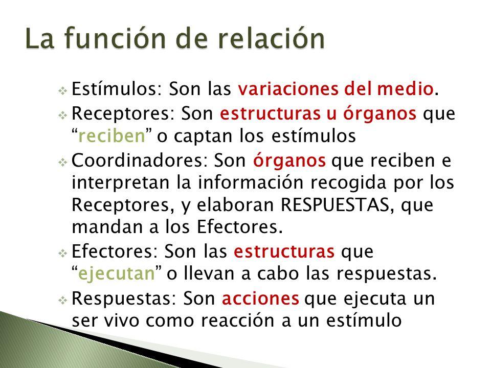 La función de relación Estímulos: Son las variaciones del medio.