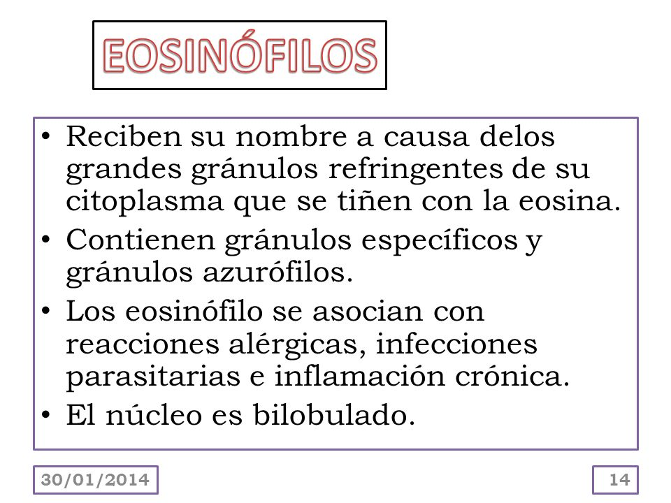 EOSINÓFILOS Reciben su nombre a causa delos grandes gránulos refringentes de su citoplasma que se tiñen con la eosina.